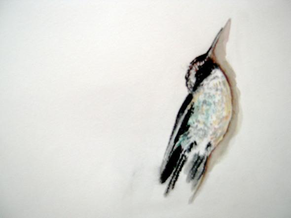 deadhummingbird1