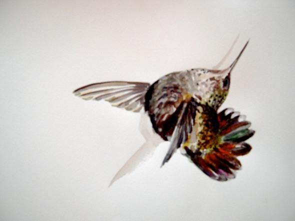 deadhummingbird2