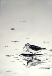 Reflection - Sandpiper